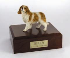 King Charles Spaniel, Brown & White