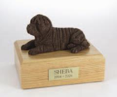 Shar Pei, Chocolate