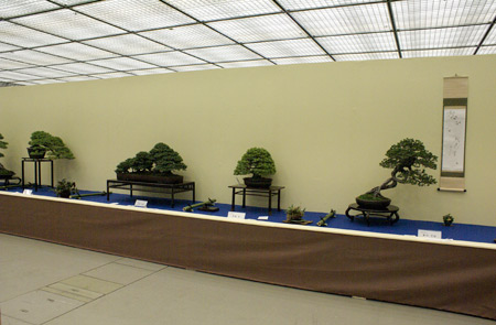 Taikan Ten Bonsai Exhibition in Kyoto