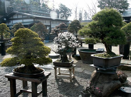 Shunka-en Bonsai Museum view