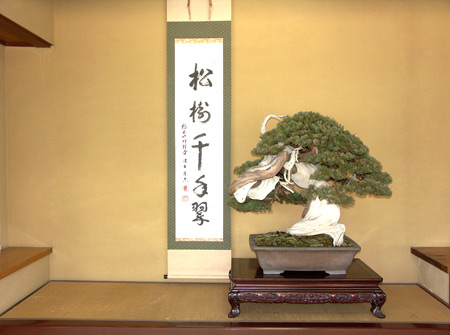 Shunka-en Bonsai Museum juniper display